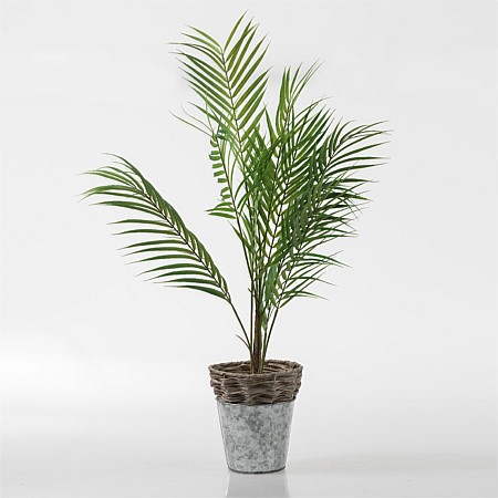 Ever Remy Parlor Palm