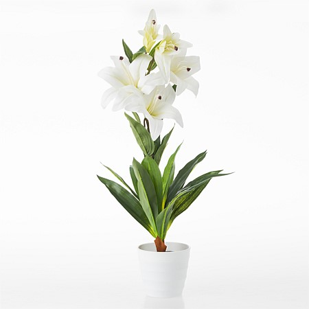 Everlasting Endless Summer Potted Lily Plant