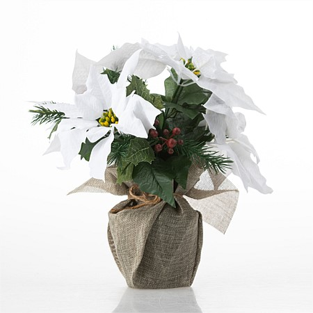 Everlasting Potted Poinsettia