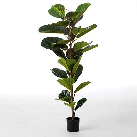 Everlasting Polly Potted Tree Fig