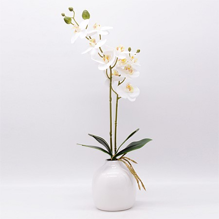 Everlasting Potted Orchid White