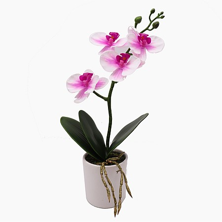 Everlasting Potted Orchid Pink