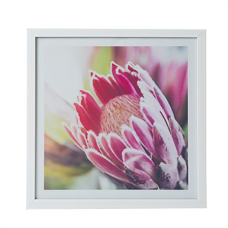 Solace Protea Flower Wall Art