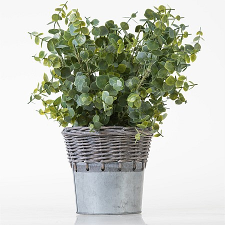 Everlasting Eucalyptus Plant In Metal Pot